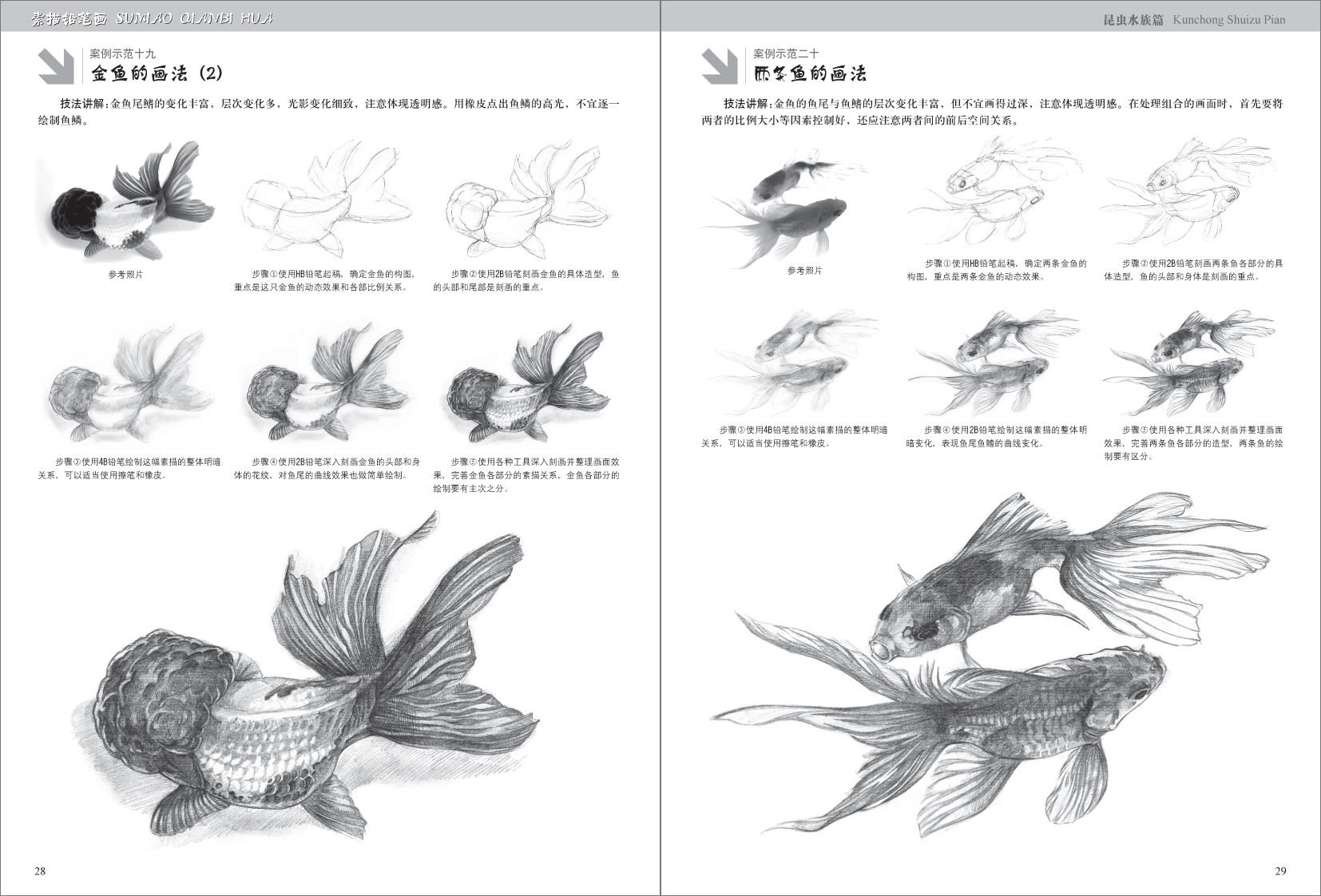 素描铅笔画·昆虫水族篇/苗鹏