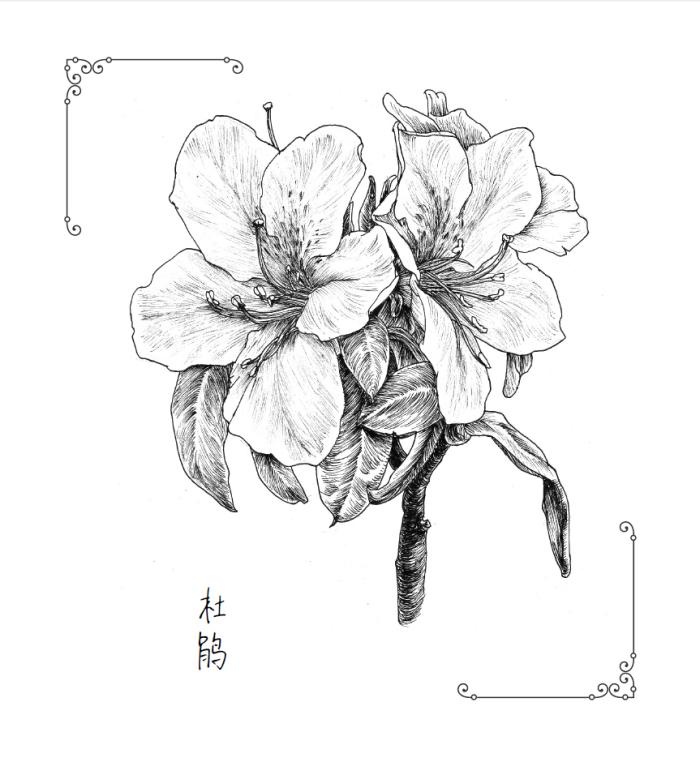 纸上花园-88种经典黑白花之绘 黎莉著 9787121305122