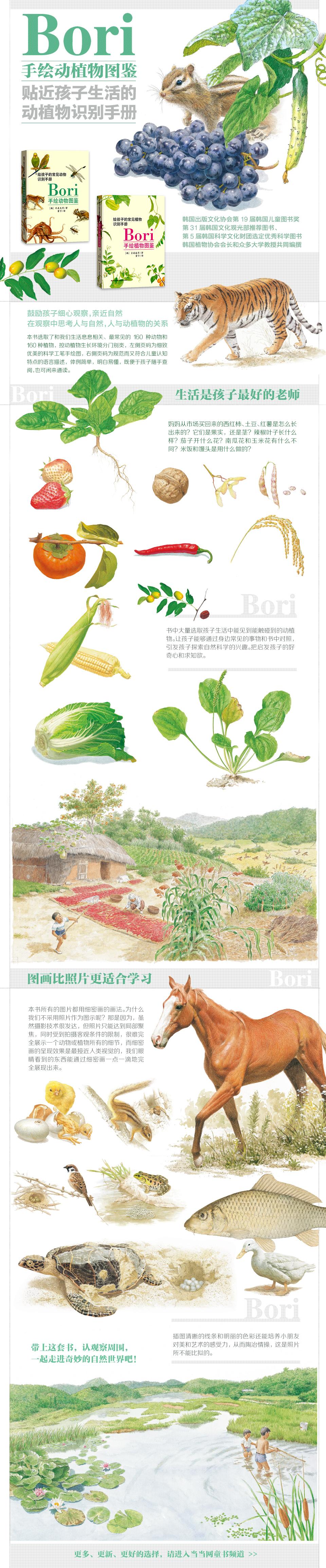 手绘玉米生长过程